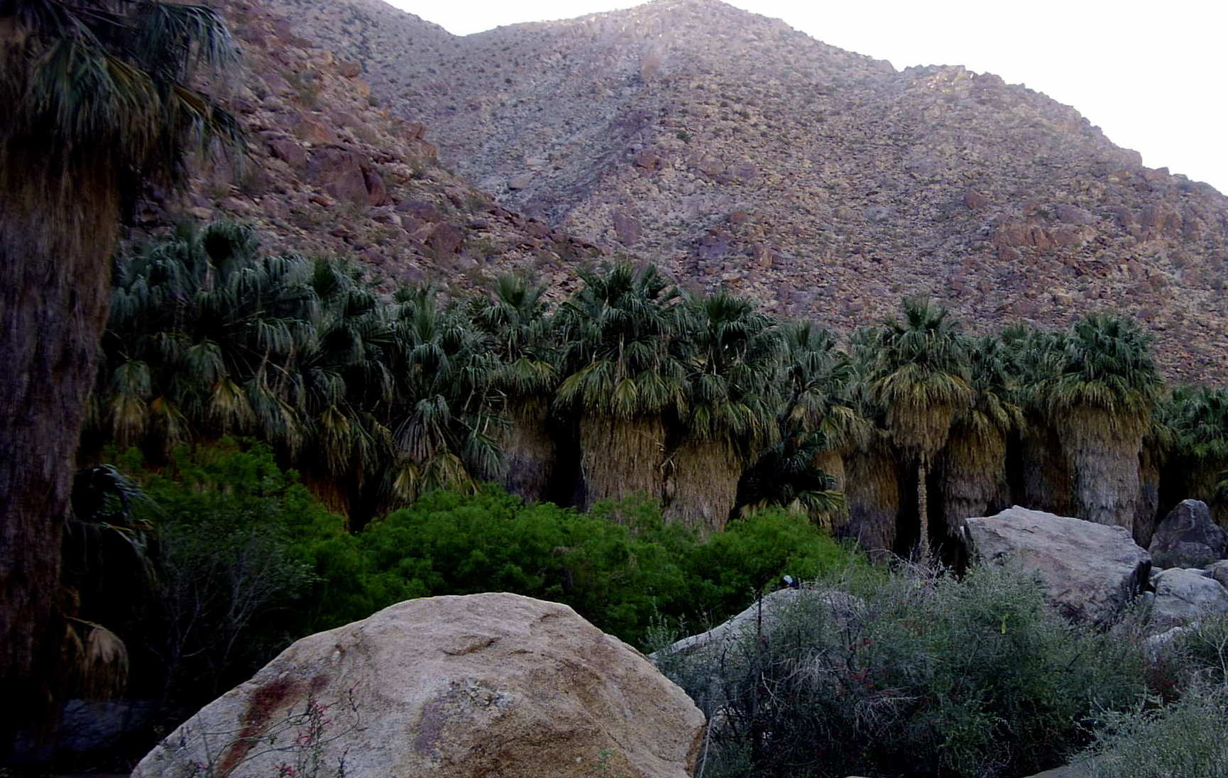 Current Image is photos/Palm_Canyon_Oasis.jpg Clicking here will display Brent_and_HALF_DOME.jpg